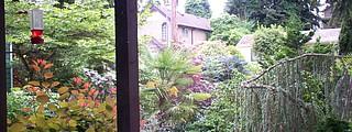 Front yard in bloom. (Ariele's Seattle house)